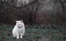 Обои green, white, grass, cat, autumn, darkness, cold
