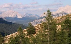 Обои пастух, вершины, отара, деревья, овцы, горы, Италия