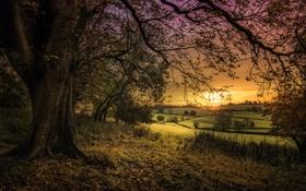 Обои поле, листья, закат, дерево, ветви, сельская местность, оранжевое небо
