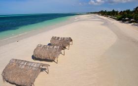 Картинка песок, море, пляж, небо, деревья, пальма, океан