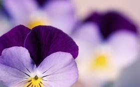 Обои цветы, макро фотографии, сады, красивые обои для рабочего стола, бесплатные картинки