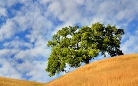 Обои облака, Дерево, небо, лето, холмы
