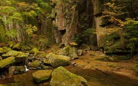 Обои лес, ручей, камни, скалы