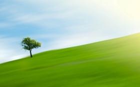 Картинка поле, дерево, One tree hill