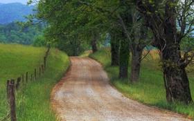 Обои дорога, трава, деревья, природа, фото, дерево, пейзажи