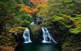Обои лес, рака, деревья, водопад, ручей, осень