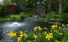 Картинка деревья, цветы, пруд, парк, камни, лилии, желтые