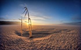 Картинка зима, поле, свет, утро