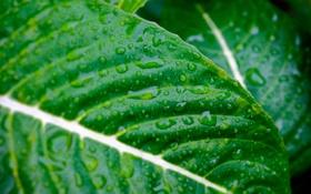 Обои капли, макро, фото, зелёные листья