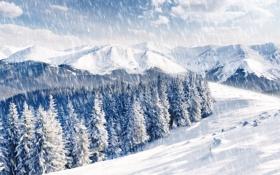 Обои зима, лес, облака, горы, ёлки, снегопад