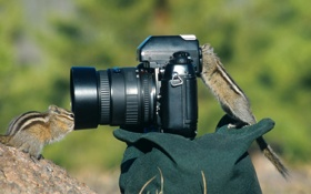 Обои природа, бурундуки, Фотокамера