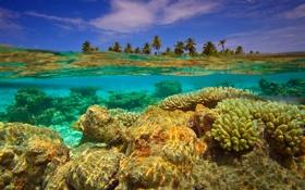 Обои Гаафу-Дхаалу, коралловый остров, индийский океан, атолл Хувадху, Мальдивские острова, вода, кораллы