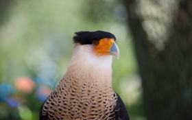 Картинка взгляд, птица, клюв, боке