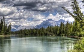 Обои лес, горы, озеро, Канада, Альберта, Banff National Park, Alberta