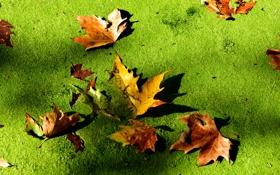 Обои осень, листья, макро, болото, тина