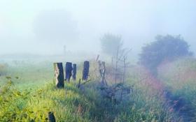 Обои трава, деревья, природа, туман, заросли, утро
