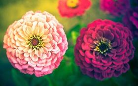 Обои растения, цветы, природа, лето