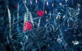 Обои природа, цветы, лето