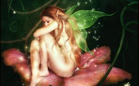 Картинка цветок, девушка, поза, фантастика, эльф, тело, крылья