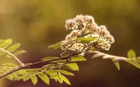Обои тепло, дерево, Цветение