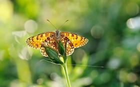 Картинка трава, макро, природа, бабочка