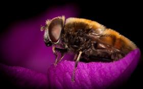 Обои цветок, пчела, волосатая