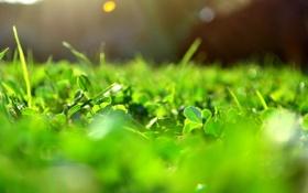 Обои зелень, солнце, макро, лучи, свет, блики, Трава