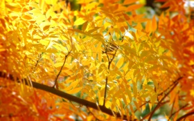 Обои листья, осень, ветка, макро