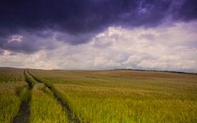 Картинка облака, поле, небо, тучи