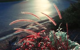 Обои дорога, трава, макро, растения, вечер, колоски, обочина