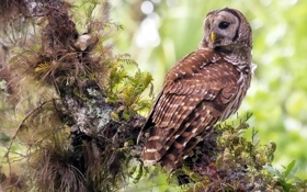 Картинка птица, лес, сова, природа, дерево