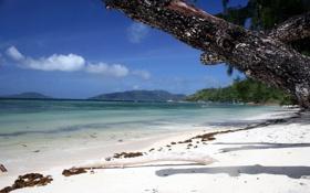 Обои песок, фокус, ствол, пляж, океан