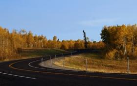 Картинка дорога, деревья, природа, фото, пейзажи, дороги, леса