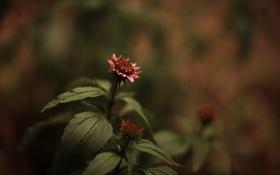 Обои фото, цвета, обои, растения, фон, макро, стиль