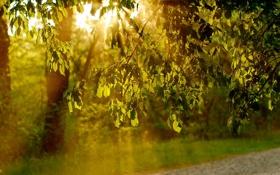 Картинка лето, листья, свет, природа