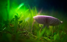 Обои трава, гриб, размытость, травинки