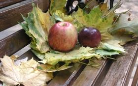 Обои еда, листья, осень, яблоки