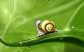 Картинка зелень, листья, капли, роса, рисунок, улитка