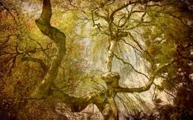 Обои лес, листья, деревья, ветки, крона