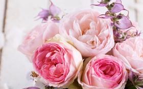 Обои фото, Цветы, Розовый, Розы