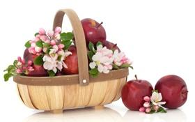 Обои яблоки, цветы яблони, корзинка