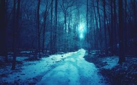 Обои зима, снег, деревья, дорога