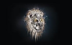 Обои фон, лев, голова