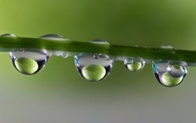 Картинка вода, капли, макро, отражение, стебель