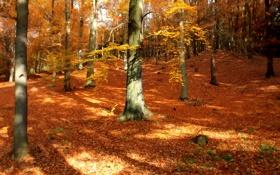 Обои осень, лес, листья, деревья, природа, парк, осенние обои