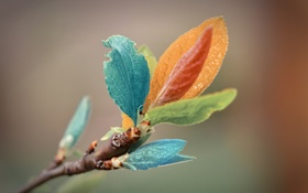 Картинка макро, цветные, ветка, литья