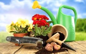 Обои примула, primrose, садовый инвентарь, садовые цветочки, garden tools, lawn and flowers, луковицы