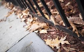 Картинка осень, листья, макро, лист, листва, решетка, тротуар