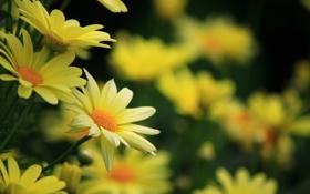 Обои цветы, стебли, лепестки, размытость, жёлтые