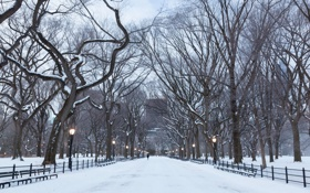 Картинка manhattan, central park, newyork